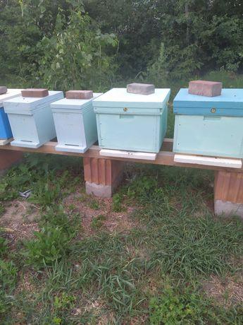 Odkłady pszczele. Silne odkłady pszczele