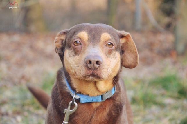 Nero - młodziutki pies do adopcji