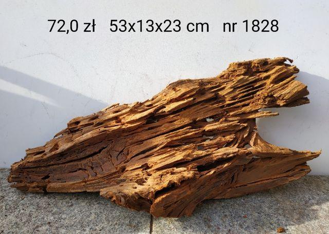 Korzenie MANGROWCA nr od 1828 do 1835, 72-79 zł/szt.