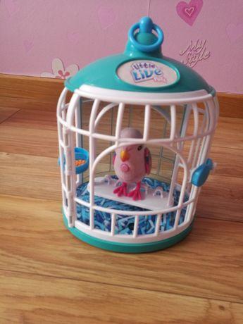 Interaktywny ptaszek Little live pets