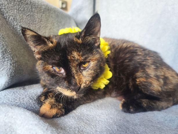 Кошечка для души Кедра!10 месяцев, стерилизована (кот,  кошка)