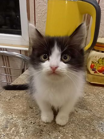 Черно-белый котенок в добрые руки