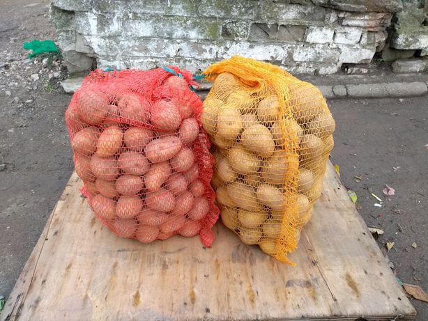 Ziemniaki z małego gospodarstwa, bez sztucznych nawozów