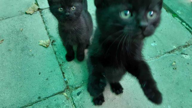 Zadbane koty oddam za darmo w dobre ręce