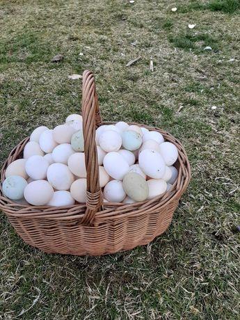 Jajka swojskie z wolnego wybiegu.