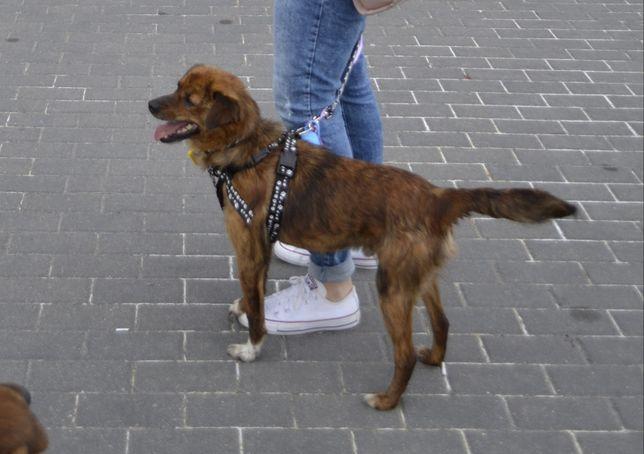 Mały psiak zdrowy po kastracji młodziutki z Kutna szuka domu adopcja