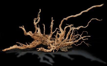 Oddam korzenie i gałęzie