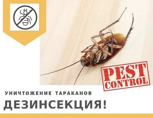 Дезинсекция квартир от тараканов, клопов, блох, клещей и т.д