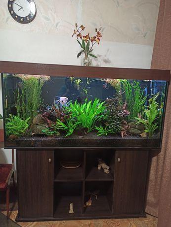 Срочно продам действующий аквариум  500 литров