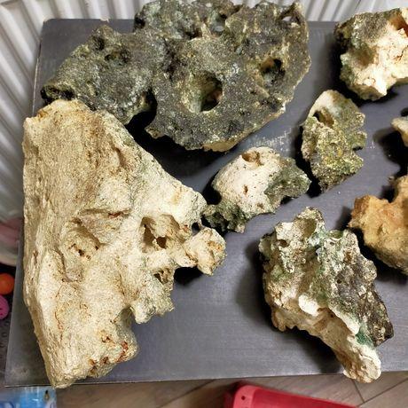 Wapień, Malawi Tanganika kamienie