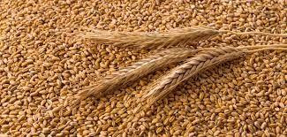Zboże zakupie pszenżyto owies żyto