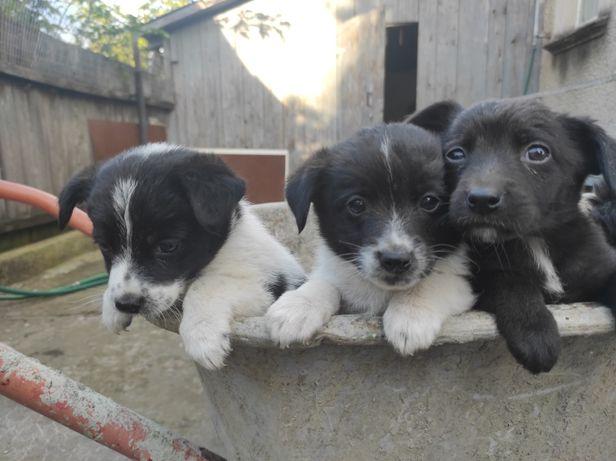 В добрые руки щенки