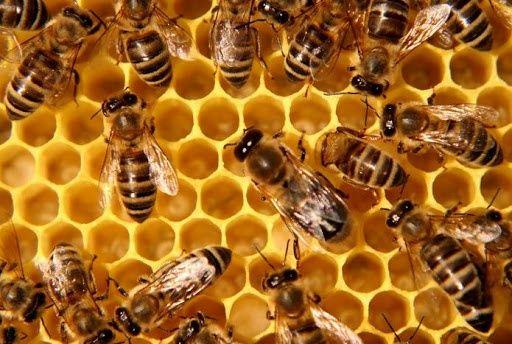 Бджолосім'я з вуликом