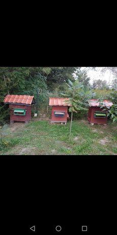Miód pszczeli z rodzinnej małej pasieki
