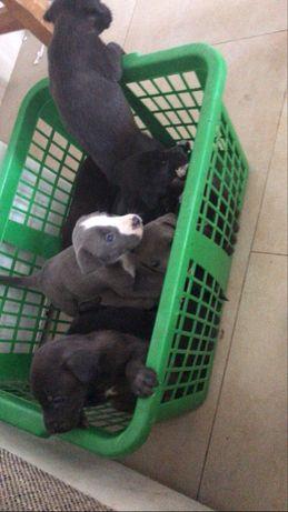 Cães com 1 mês para adoção