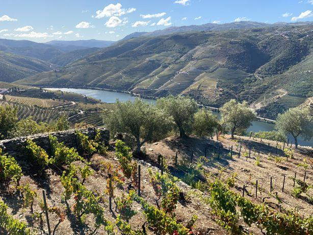 Quinta vistas para o Rio Douro