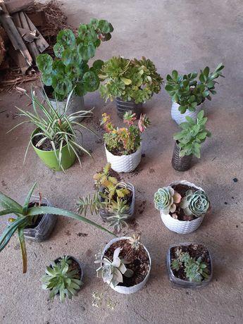 Plantas interior e exterior