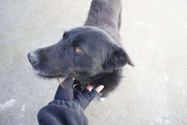 Lira - jovem cadela médio /grande já esterilizada