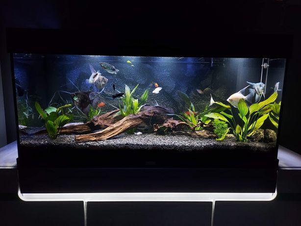 Akwarium Juwel 180L cały zestaw, filtr, grzałka,życie itp.