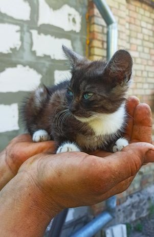 Котик, котенок, кошеня
