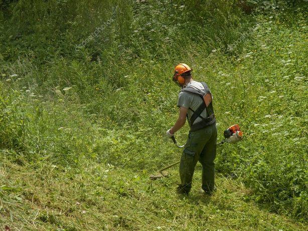 Предоставляем услуги по покосу травы и спилу деревьев.