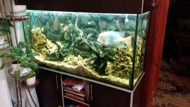Продам аквариум. Срочно. Торг.