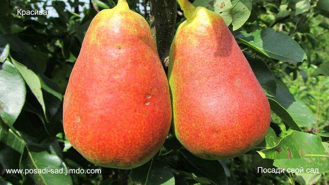 Саженцы плодовых деревьев и черенки для летней окулировки