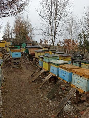 Sprzedam pszczoły z ulami lub bez