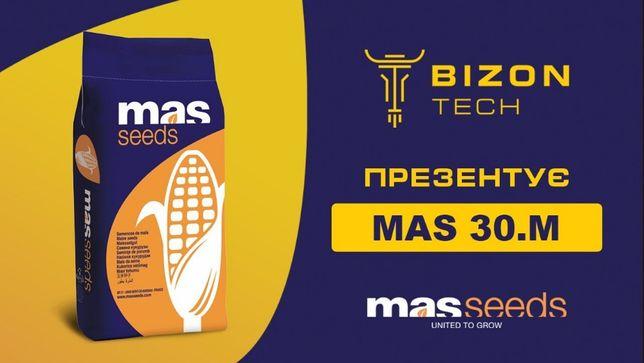 Семена Кукурузы Mас 30.M (Mas 30.M)