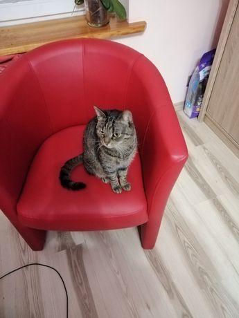 Oddam kotkę bardzo przyjazną