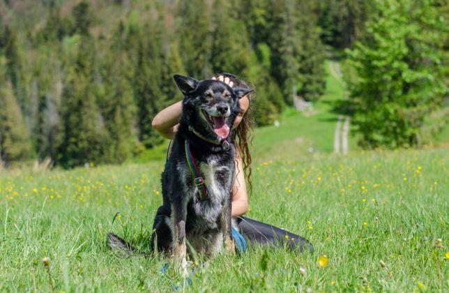 ISKRA - piękna energiczna suczka w typie husky/wilka do adopcji