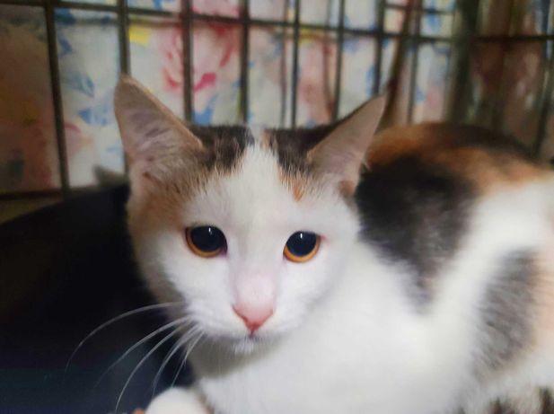 Ліза, маленьке котятко-янголятко. 3 місяці. Кішка, кіт,Київ