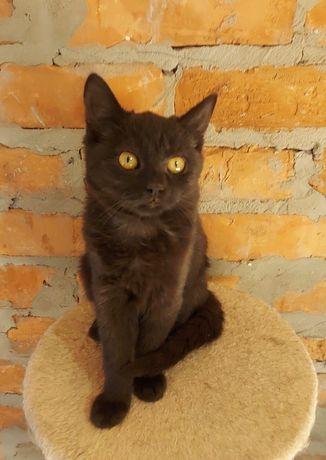 Чудесный чёрный котёнок - кошка