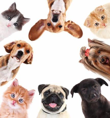 Перевозка домашних животных в любую точку мира!