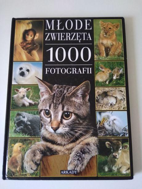 Młode zwierzęta 1000 fotografii