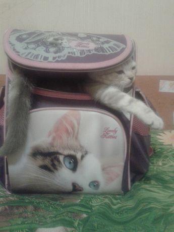 Красивый каркасный рюкзак для девочки. 1-3 класс Class