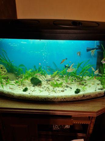 Akwarium 80x40x35 panoramiczne 112l prawie nowe + 2 gratisy