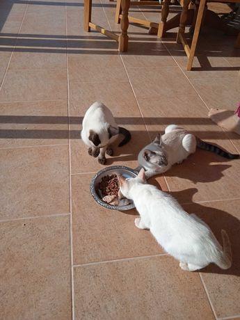 Lindos Gatinhos para doação.