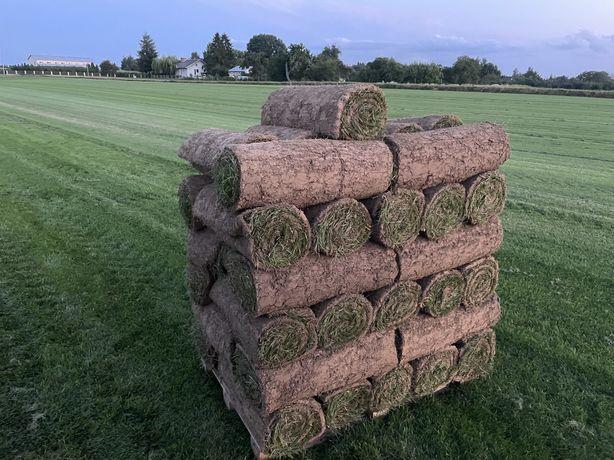 Trawa z rolki trawa w rolkach prosto od PRODUCENTA