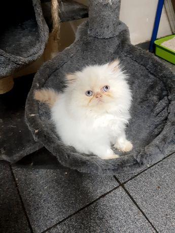 Bébé gatinho fofinho