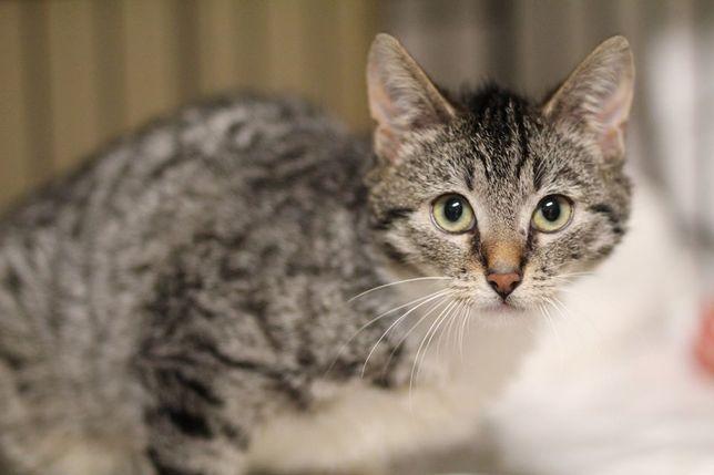 Ptysia - młoda koteczka szuka kochającego domu! OTOZ Animals Ciapkowo