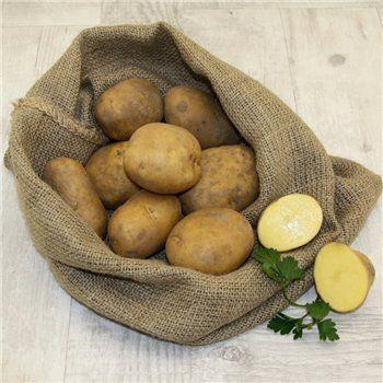 Ziemniak sadzeniak LORD kwalifikat 2021