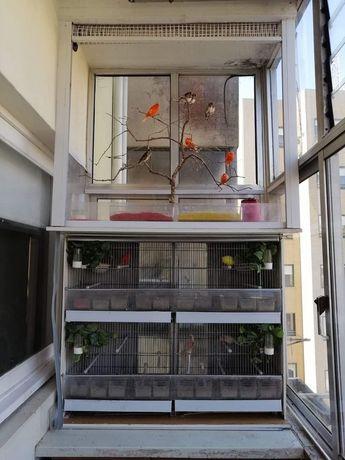 Viveiros para aves