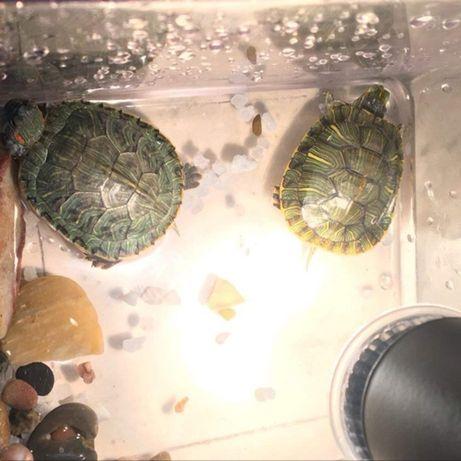 Ультрафиолетовая галогеновая лампа + обогрев для черепахи, рептилий