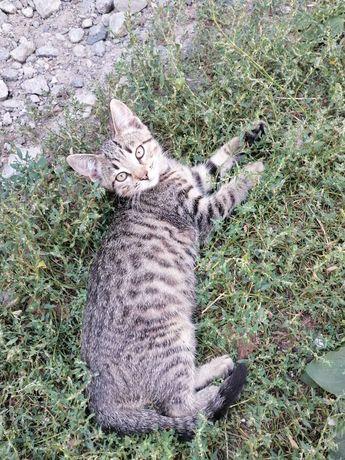 Котята в хорошие руки, котенок в дар