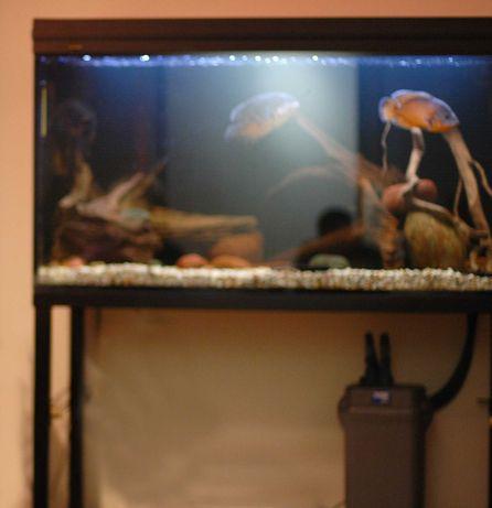 Akwarium ok. 500 l. ze stelażem, filtrem i oświetleniem