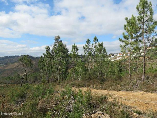 Terreno  Venda em Torrozelo e Folhadosa,Seia