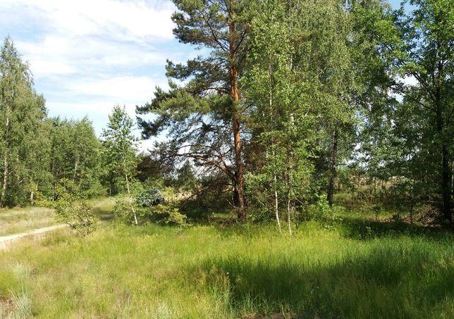 Лісовичі, 12 соток в лісі, біля озера