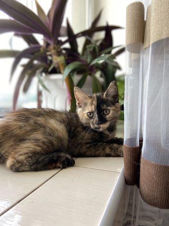 Кошеня шукає дім