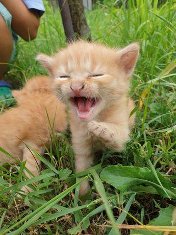 Котята от хорошей кошки